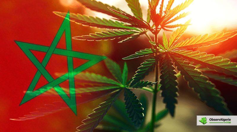 Maroc : Le projet de loi sur l'usage légal du cannabis approuvé